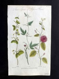Thornton 1812 Hand Col Botanical Print. Three Species of Passion Flower